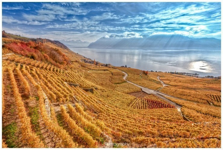 Top 10 Wine-Lavaux-Photo by JHG Photography