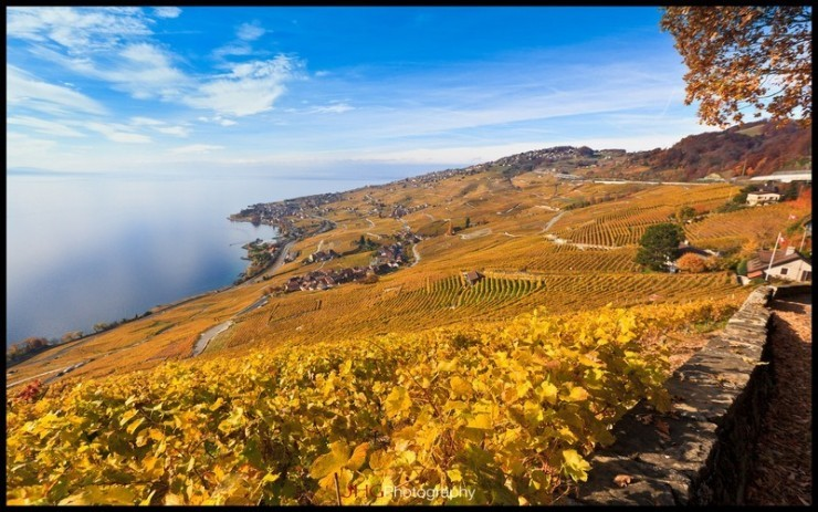 Top 10 Wine-Lavaux-Photo by JHG Photography2