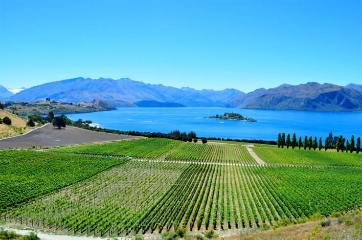 Top 10 Wine-Rippon-Photo by Bobbi Lee Hitchon
