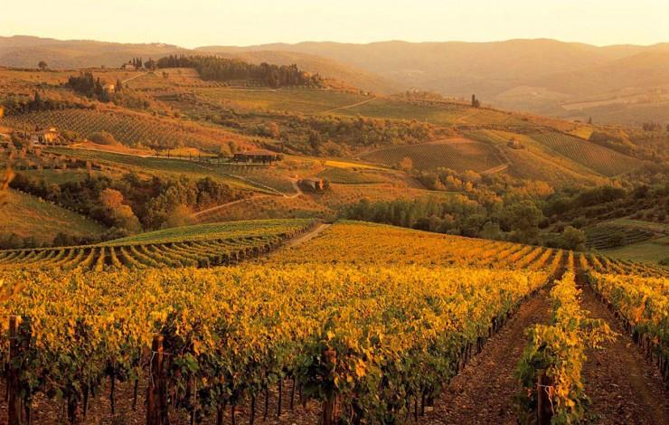 Top 10 Wine-Tuscany