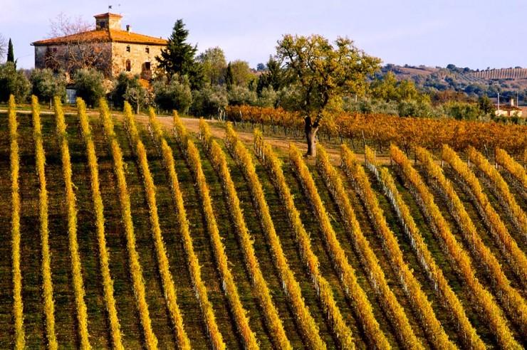 Top 10 Wine-Tuscany3