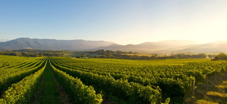 Top 10 Wine-Yarra2