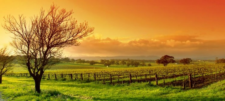 Top 10 Wine-Yarra3