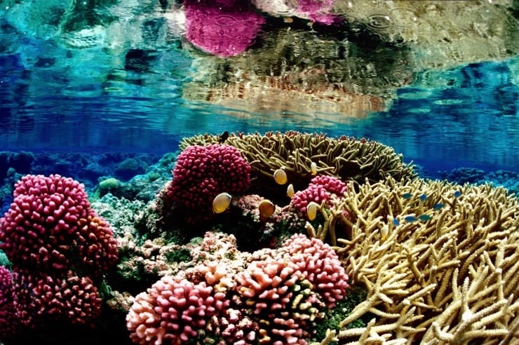 Top Wonders-Reef