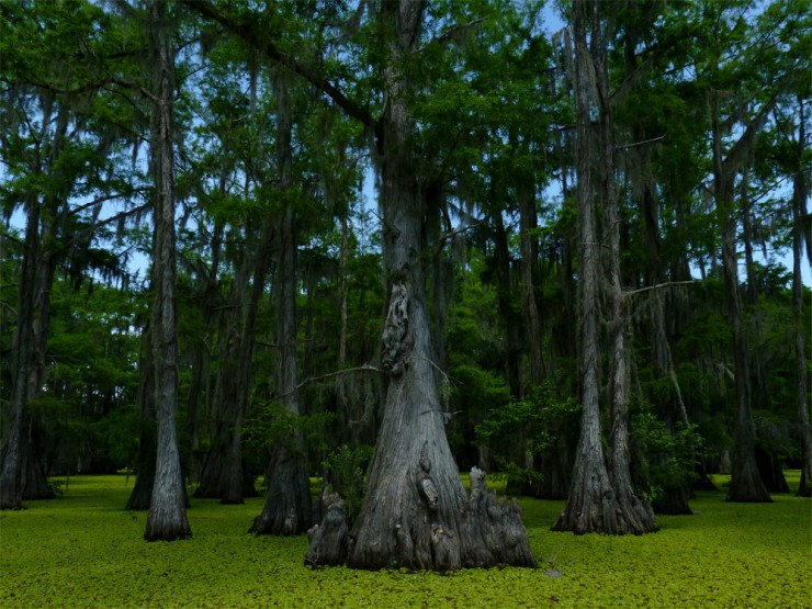 Top American Lakes-Caddo4