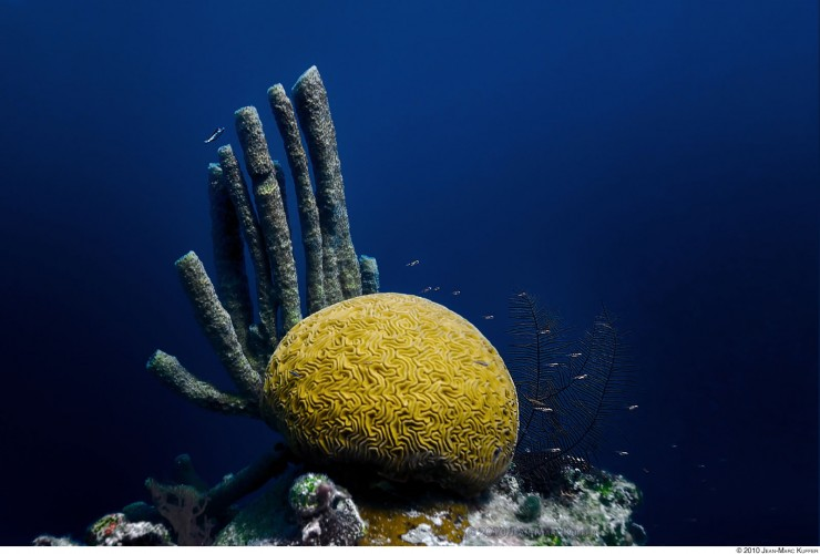 Underwater photo of brain coral, tube coral and trunk fish taken in the Great Blue Hole in Belize