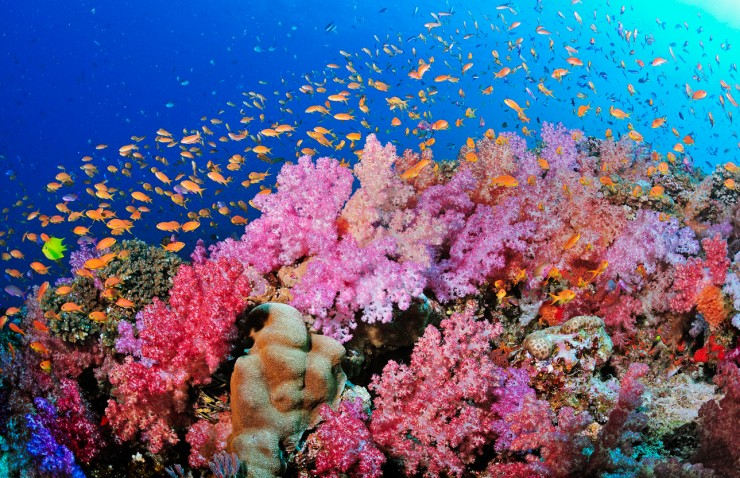Top 10 fascinating coral reefs places to see in your - Best place to dive the great barrier reef ...