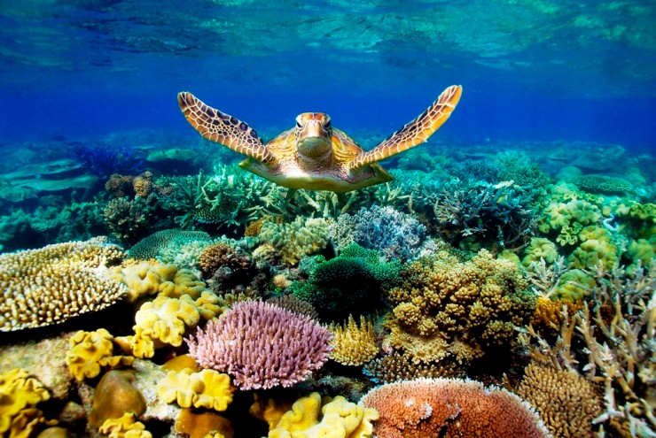 Top Coral Reefs-Great Barrier