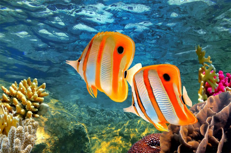 Top Coral Reefs-Great Barrier4