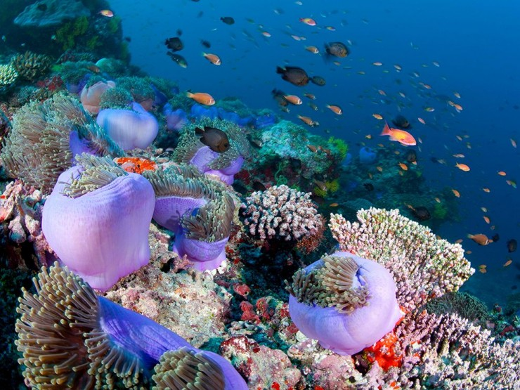 Top Coral Reefs-Maldives-Photo by WaterFrame-Alamy