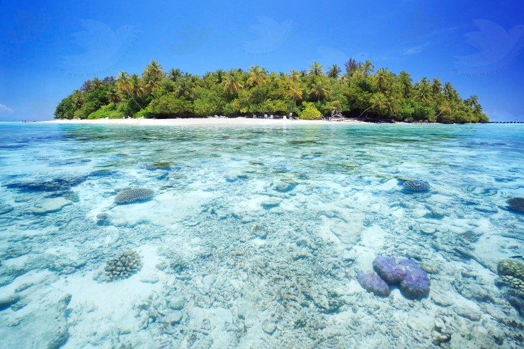 Maldives, South Male Atoll, Indian ocean