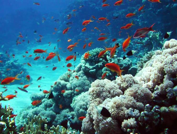 Top Coral Reefs-Mauritius