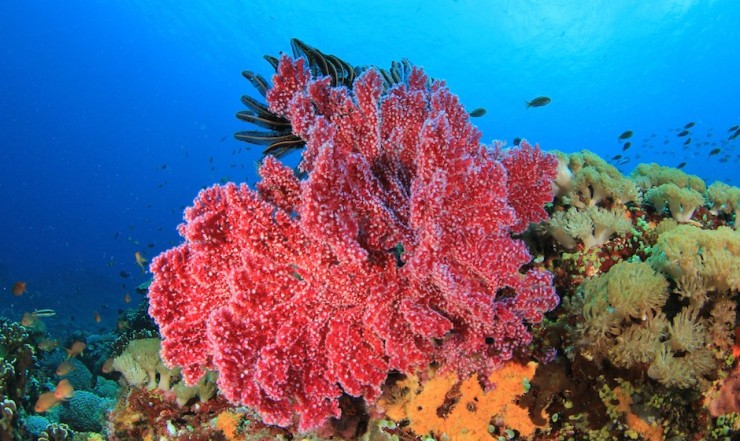 Top Coral Reefs-Mauritius2