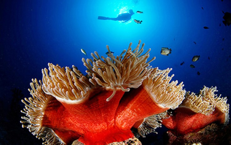 Top Coral Reefs-Mauritius3