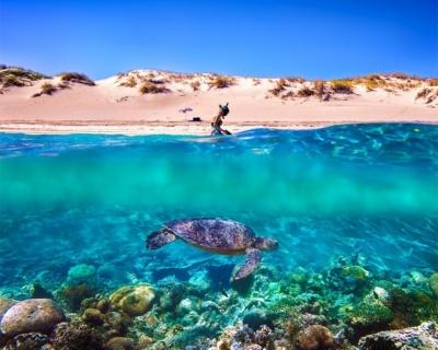 Top 10 Fascinating Coral Reefs