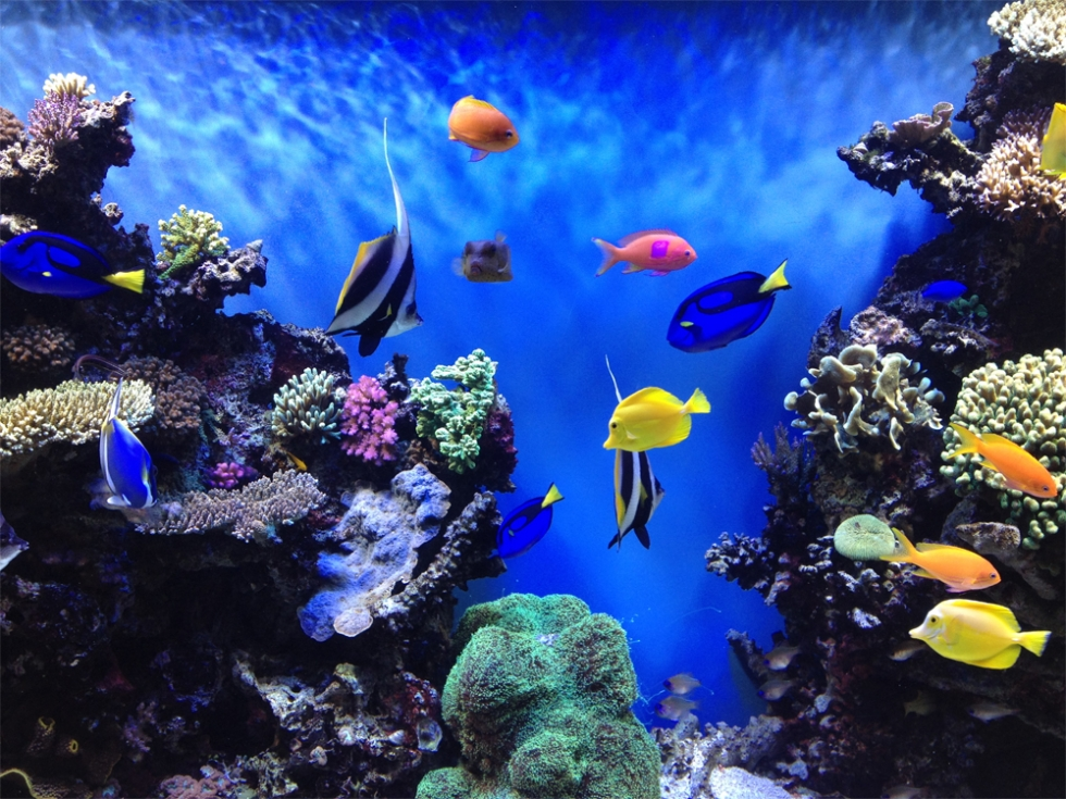 Top 10 Wonders Of The Underwater World Places To See In