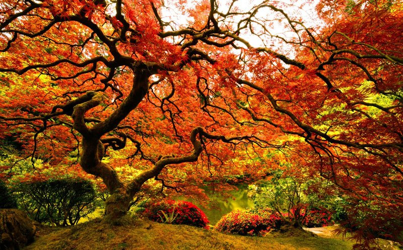 Top 10 Wonderful Japanese Gardens