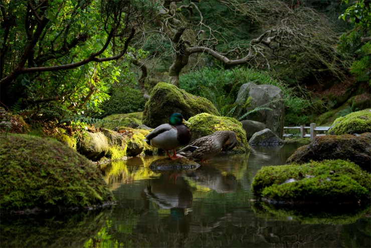 portland photo by tony herrig - Japanese Garden