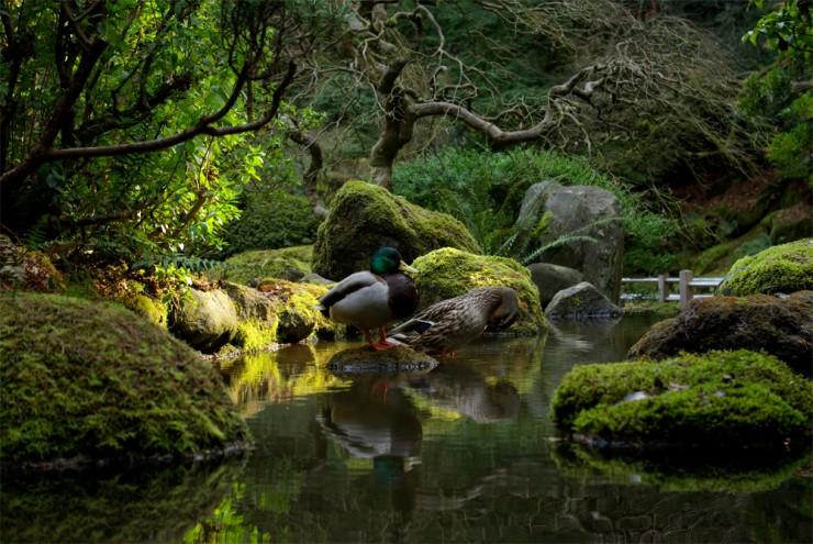 Portland Photo By Tony Herrig