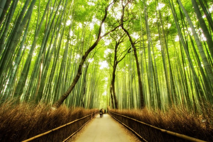 Top Forested-Bamboo-Photo by Agustin Rafael Reyes