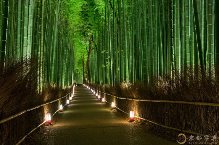 Top Forested-Bamboo-Photo by Haruka Suzuki