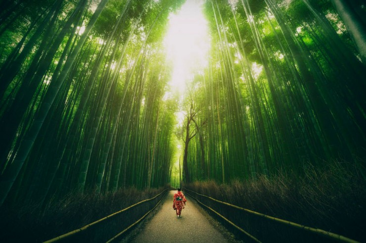 Top Forested-Bamboo-Photo by Peter Stewart