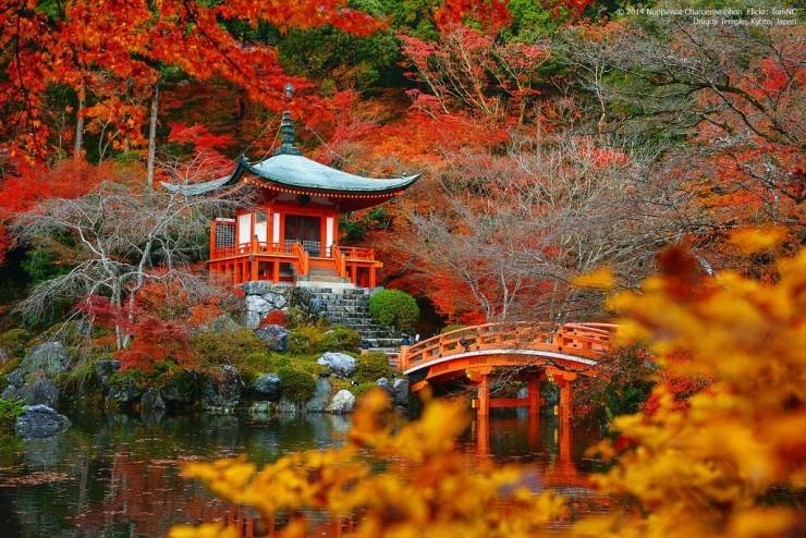 Top Forested-Daigo-Photo by Tom NC