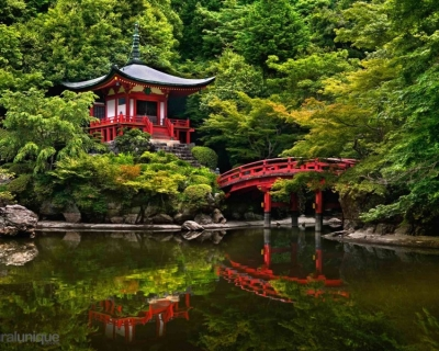 Top 10 Beautiful Forests Across the World