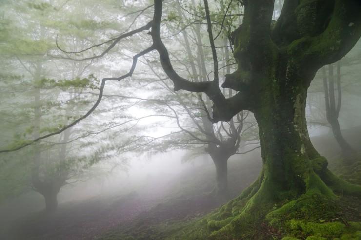 Top Forested-Gorbeo-Photo by Jesús Ignacio Bravo Soler