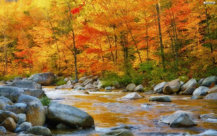 Top Forested-New Hampshire2