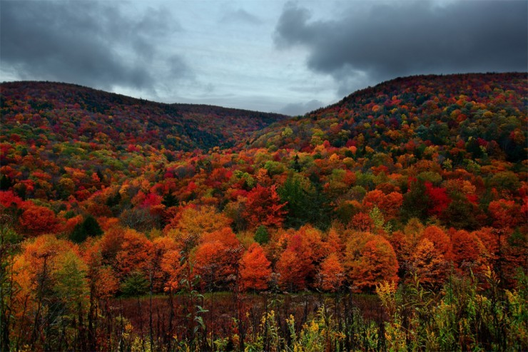 Top Forested-New Hampshire3