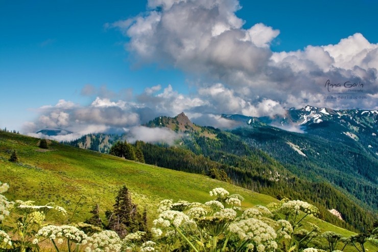 Top Forested-Olympic-Photo by Anna Gorin