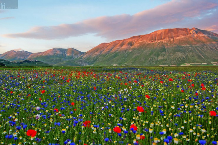 Castelluccio-Photo by Francesco Riccardo Iacomino