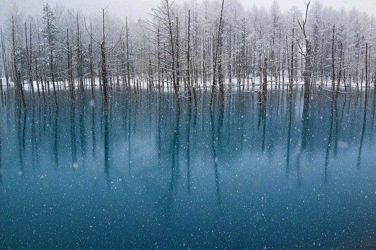 Blue-Photo by Kent Shiraishi4