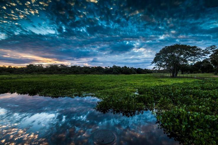 Pantanal-Photo by Eduardo Uip
