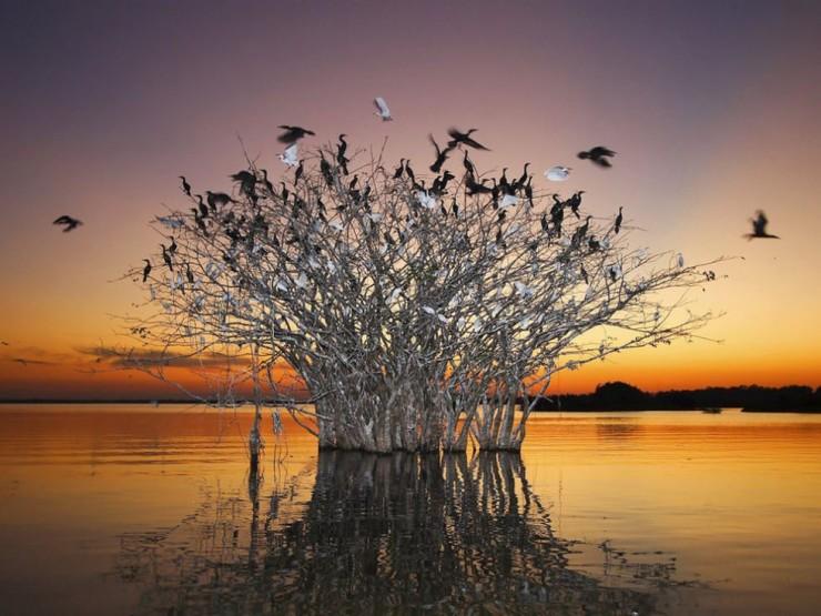 Pantanal-Photo by Mike Bueno