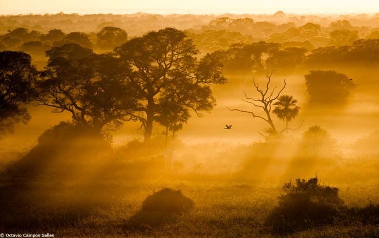 Pantanal-Photo by Octavio Campos Salles