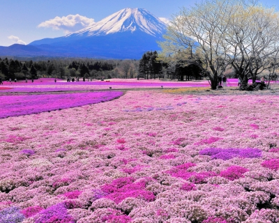 Top 10 Fun Things to See and Do in Hokkaido