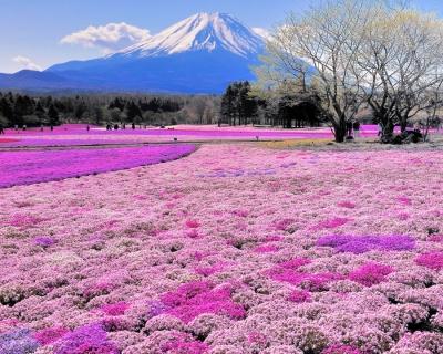 Top 10 Fun Things to See and Do in Hokkaido