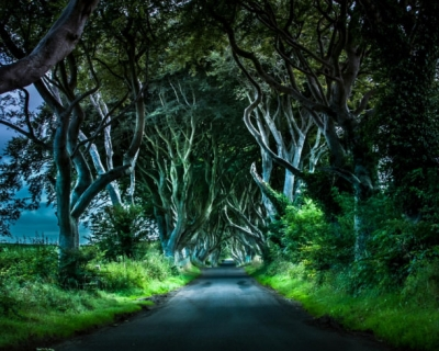 Top 10 Unexpectedly Amazing Groves and Forests