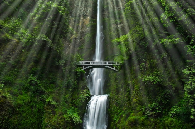 Multnomah-Photo by Thomas Duffy