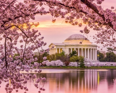 Top 10 Cherry Blossom Festivals in 2016