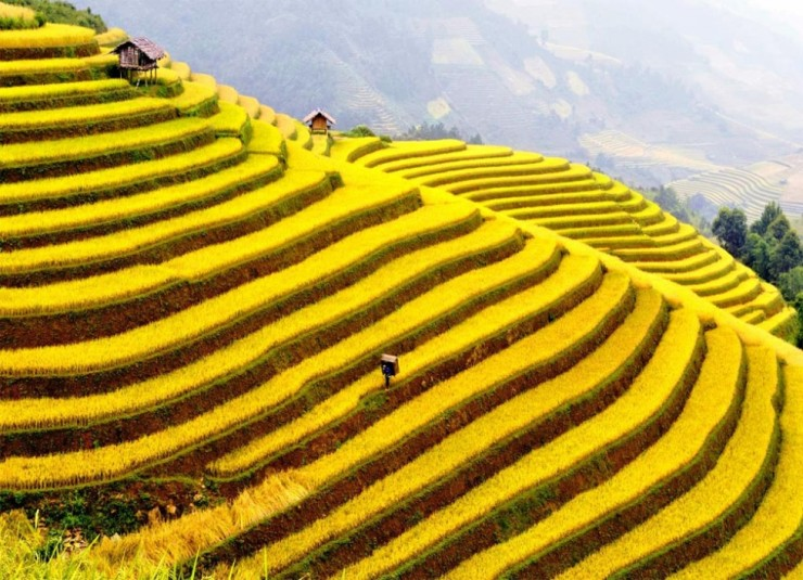 جاذبه های ویتنام Muong