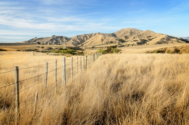 Hills around Martinborough dried out by summer drought
