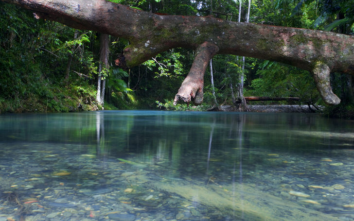 Daintree Rainforest, Australia