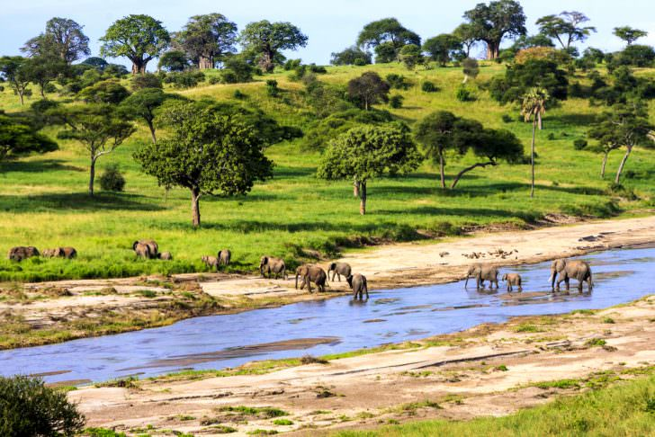 Elephants crossing the river in Serengeti National Park, Tanzania
