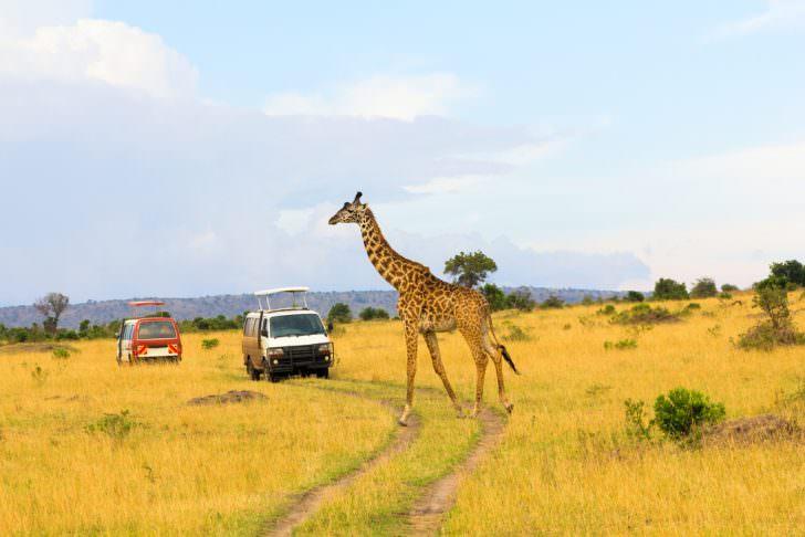 Giraffe crossing the road in Masai Mara National Reserve, Tanzania