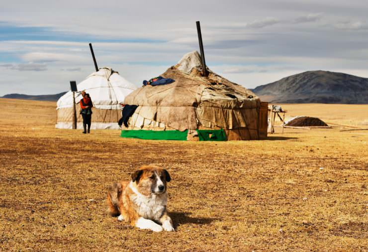 Ger, Mongolia © Shutterstock, Inc.