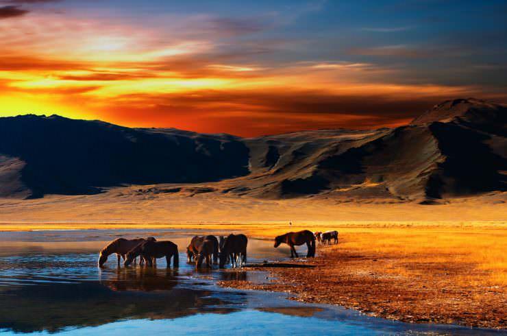 اسب در مغولستان