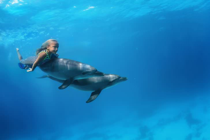 A little girl swimming with pair of dolphins underwater